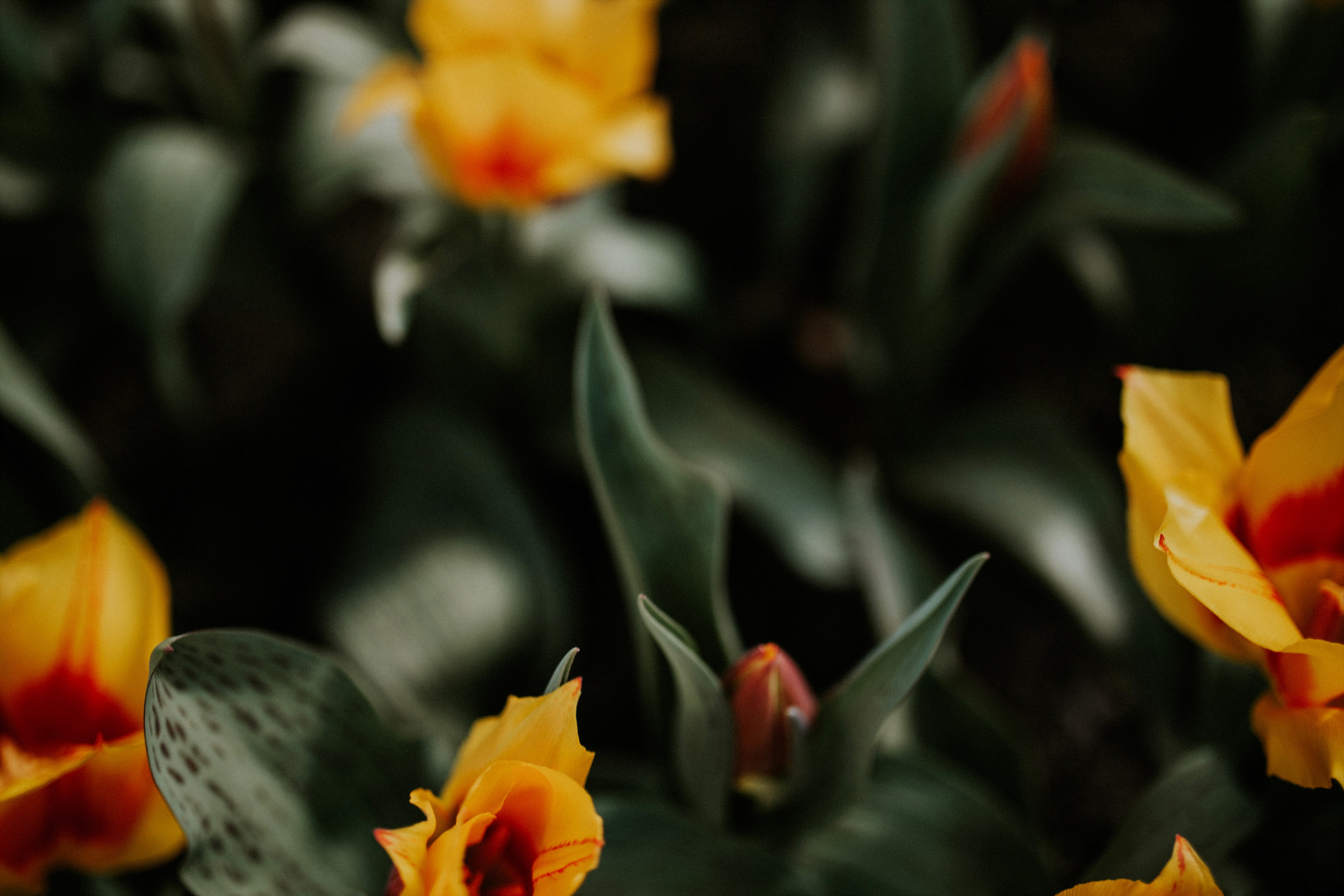 spring-botanical-gardens-dublin-photography-0009.jpg