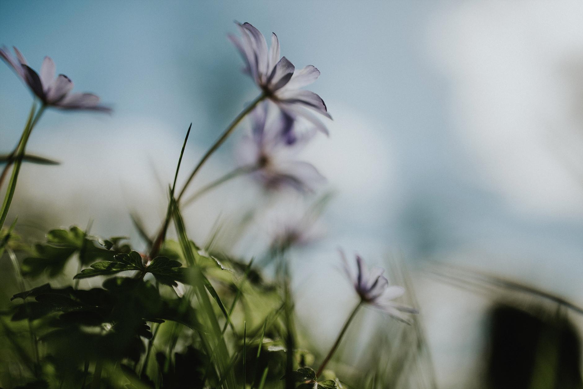 spring-botanical-gardens-dublin-photography-0010.jpg