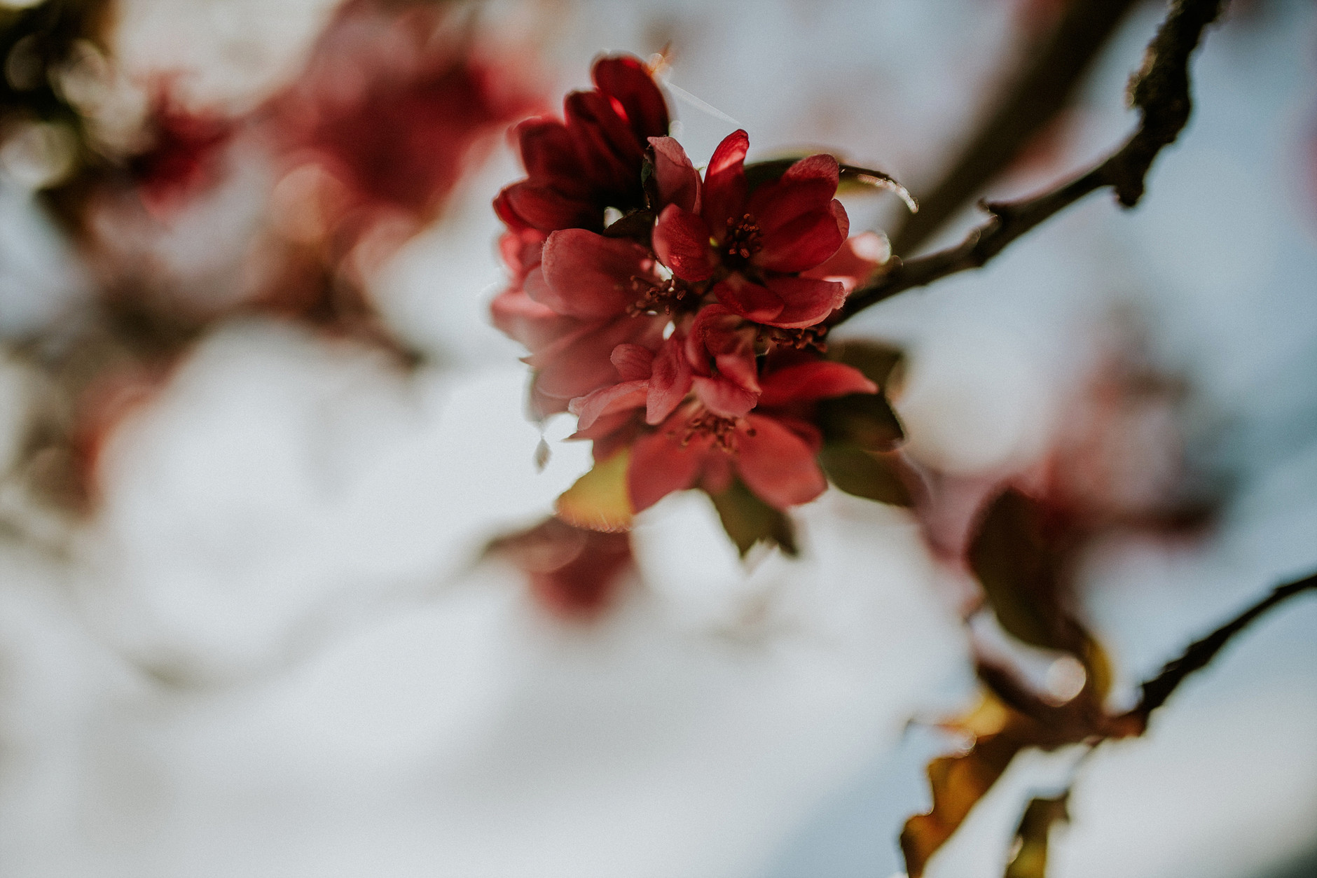 spring-botanical-gardens-dublin-photography-0012.jpg
