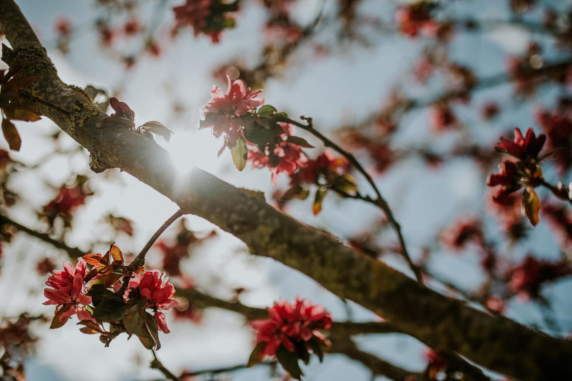 spring-botanical-gardens-dublin-photography-0011.jpg