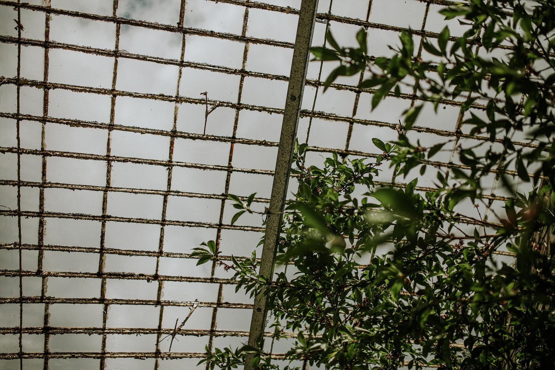 spring-botanical-gardens-dublin-photography-0015.jpg