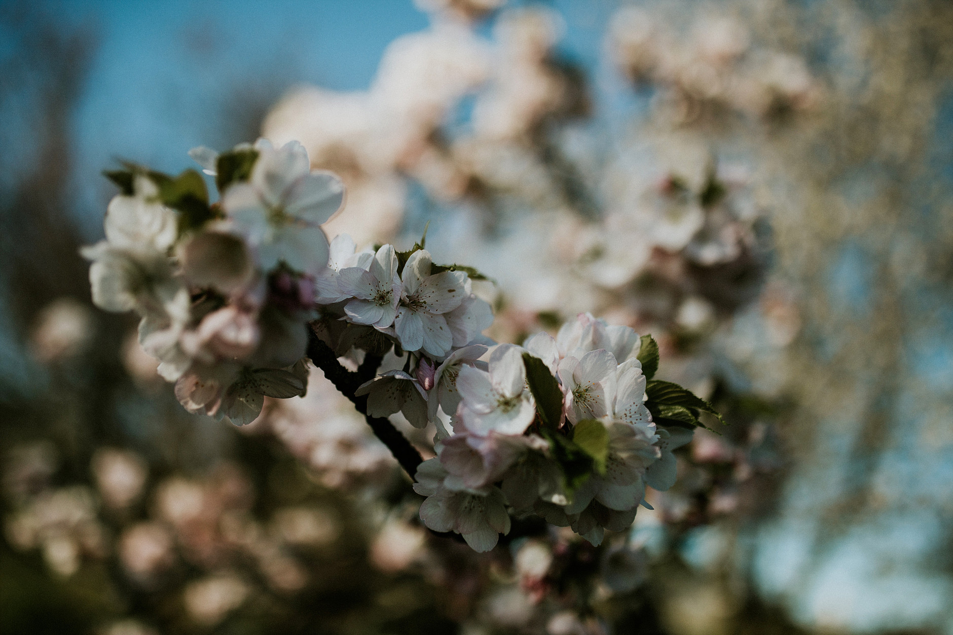 spring-botanical-gardens-dublin-photography-0016.jpg