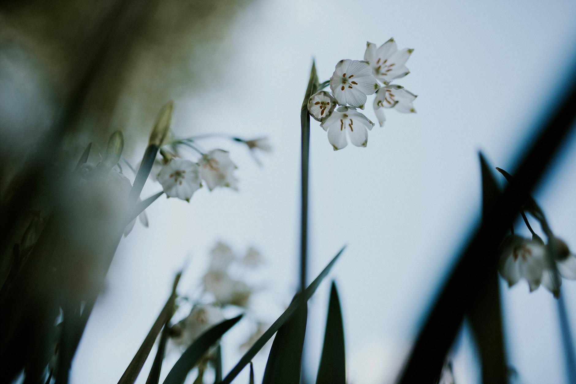 spring-botanical-gardens-dublin-photography-0018.jpg