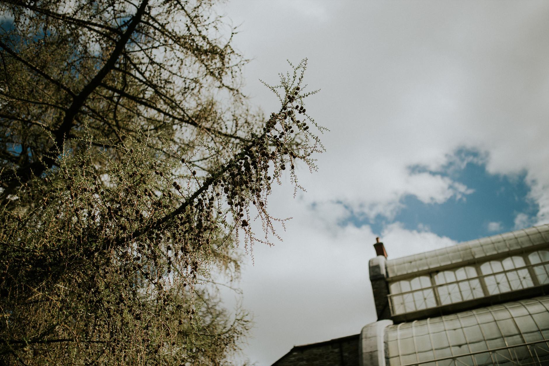 spring-botanical-gardens-dublin-photography-0022.jpg