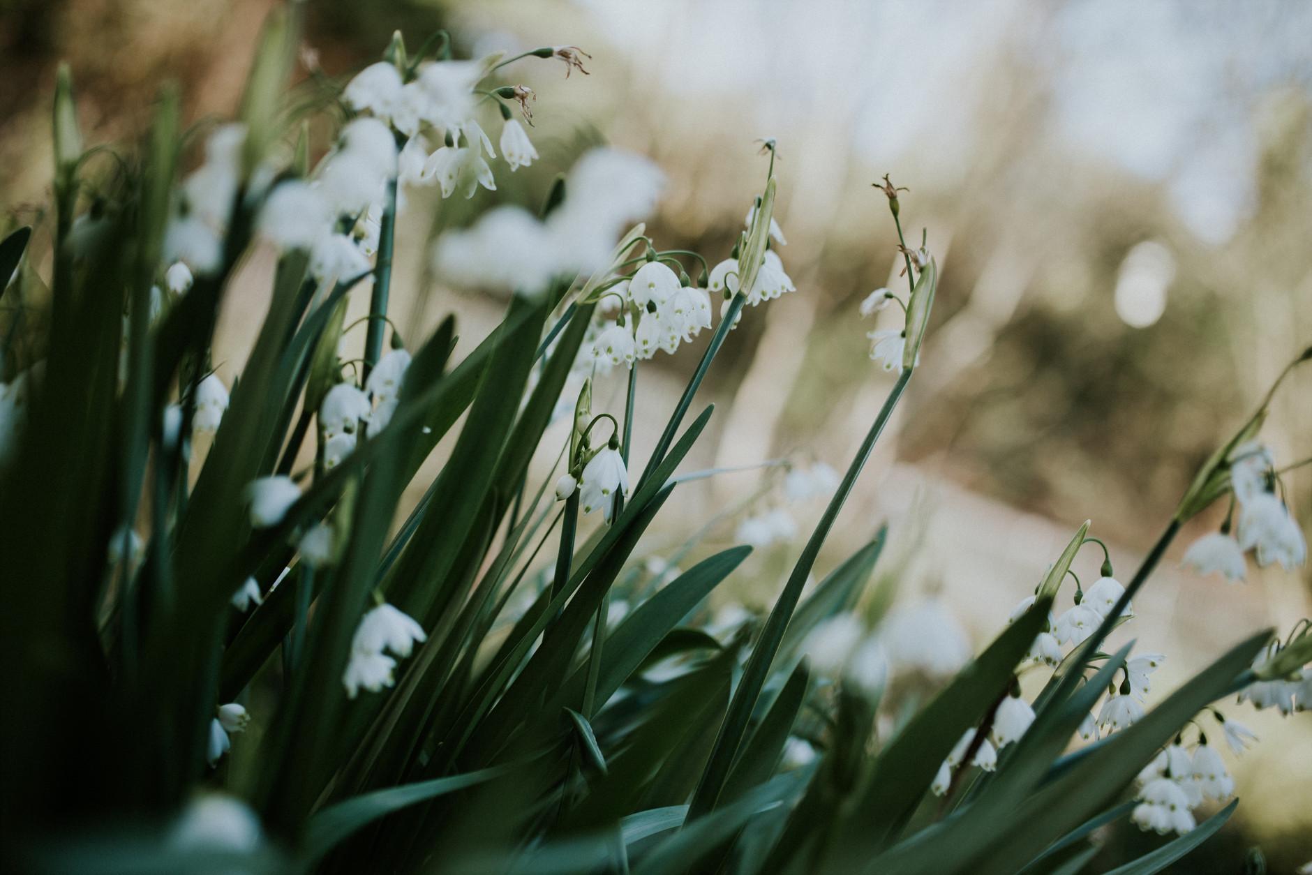 spring-botanical-gardens-dublin-photography-0024.jpg