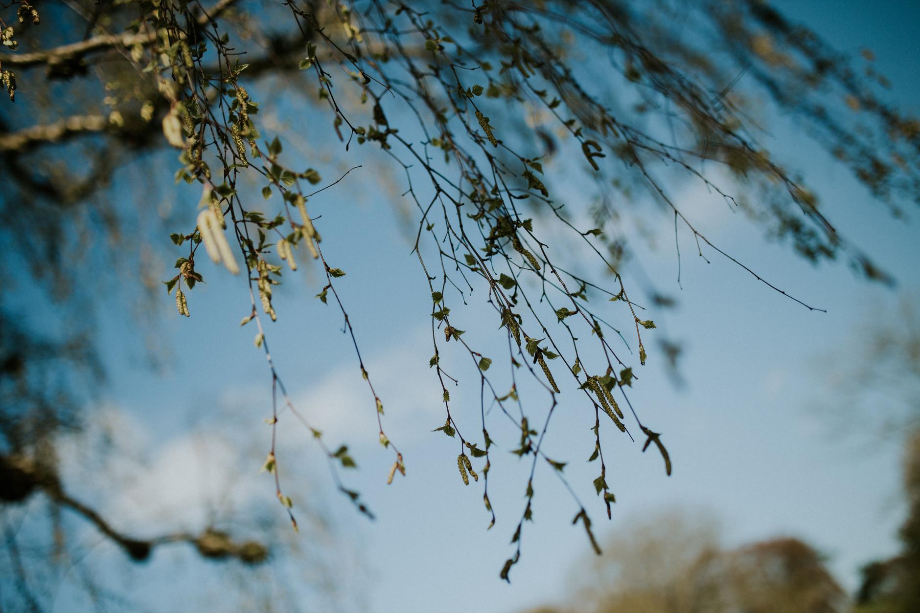 spring-botanical-gardens-dublin-photography-0025.jpg