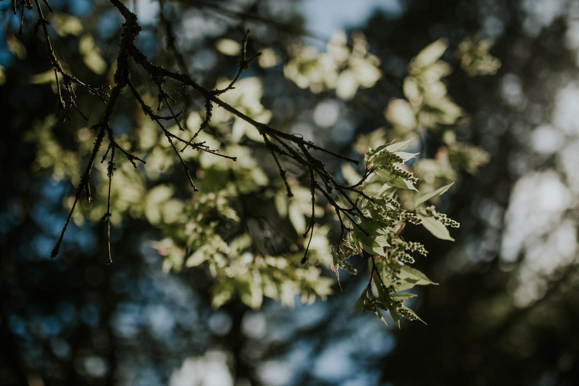 spring-botanical-gardens-dublin-photography-0028.jpg