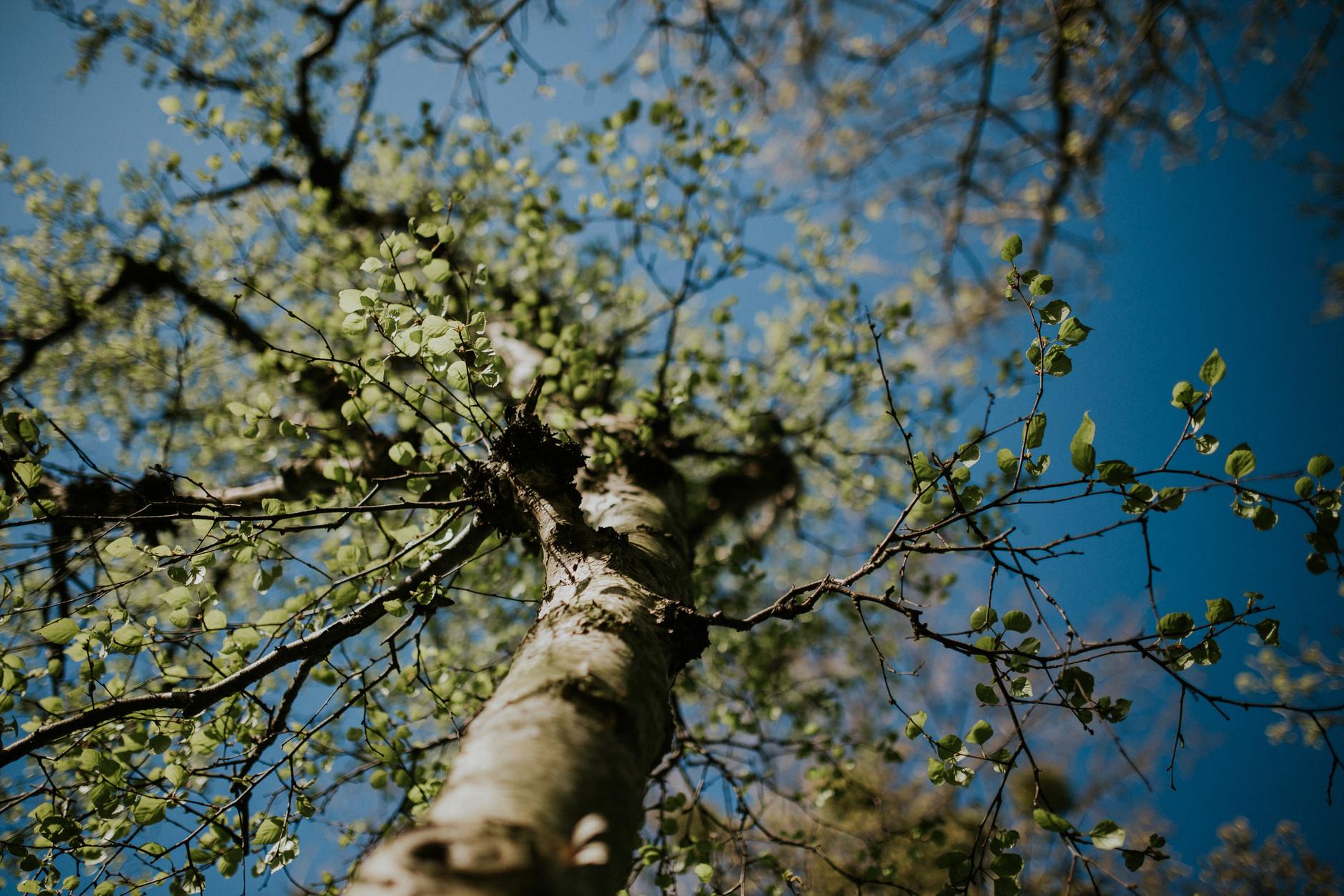 spring-botanical-gardens-dublin-photography-0029.jpg