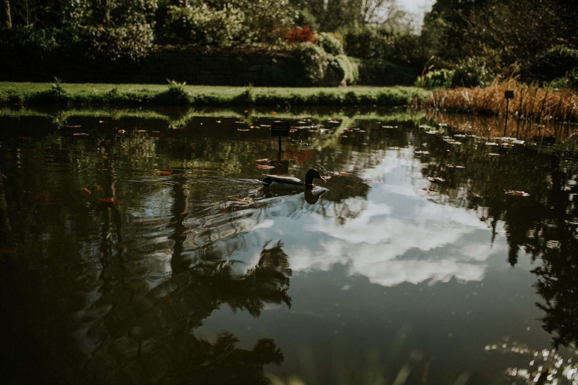 spring-botanical-gardens-dublin-photography-0030.jpg