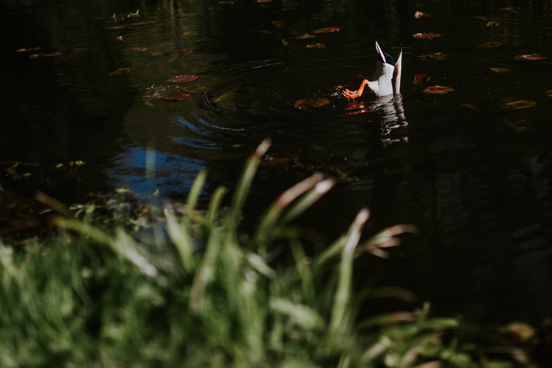spring-botanical-gardens-dublin-photography-0031.jpg