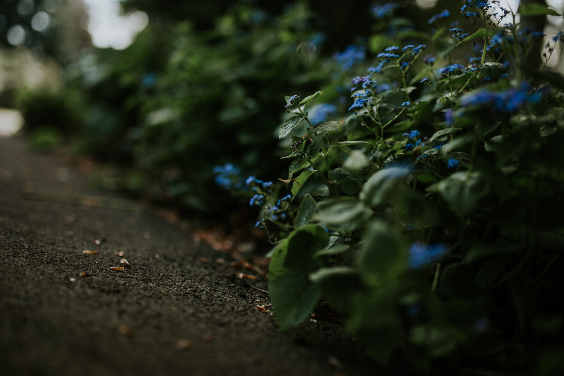 spring-botanical-gardens-dublin-photography-0032.jpg
