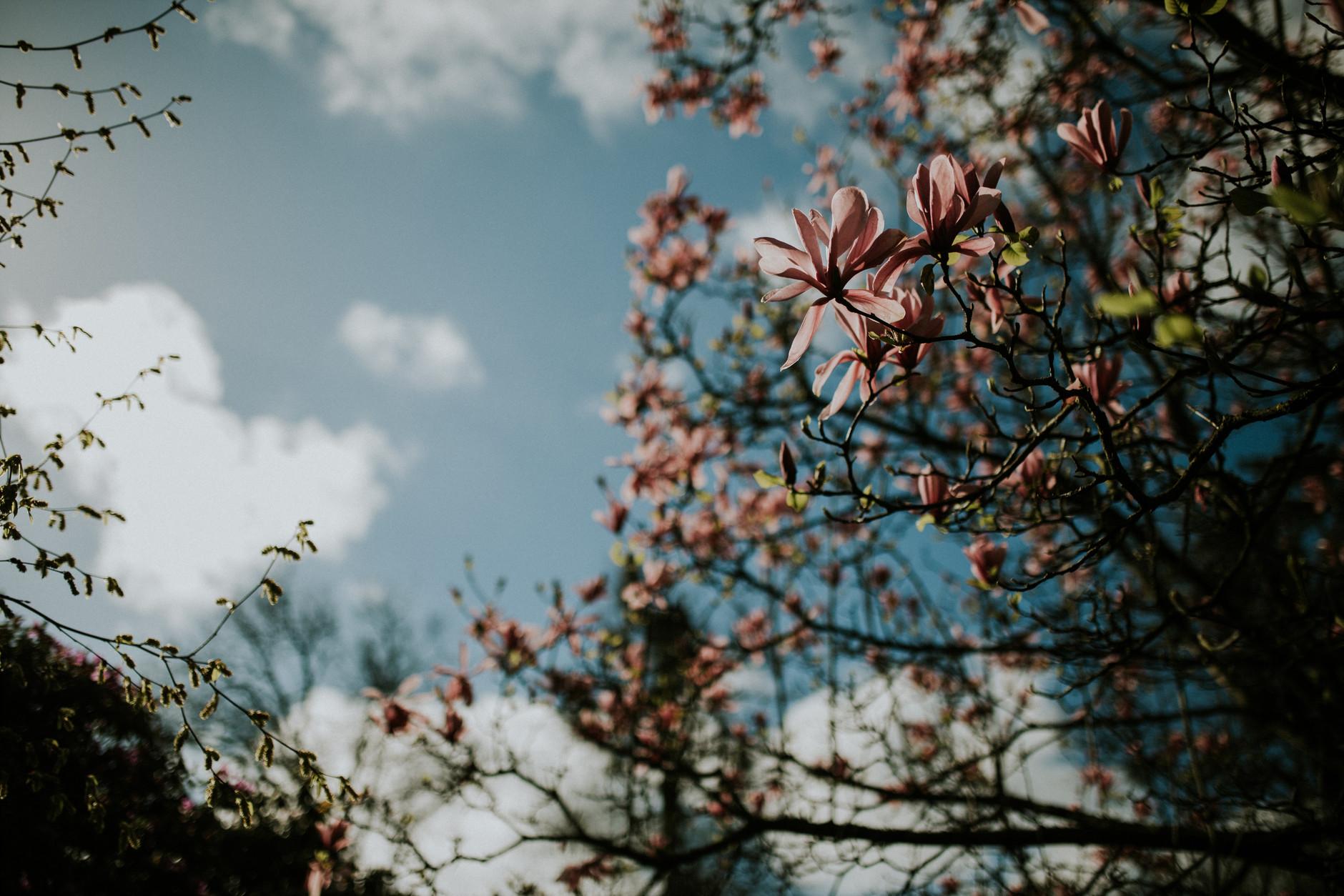 spring-botanical-gardens-dublin-photography-0035.jpg