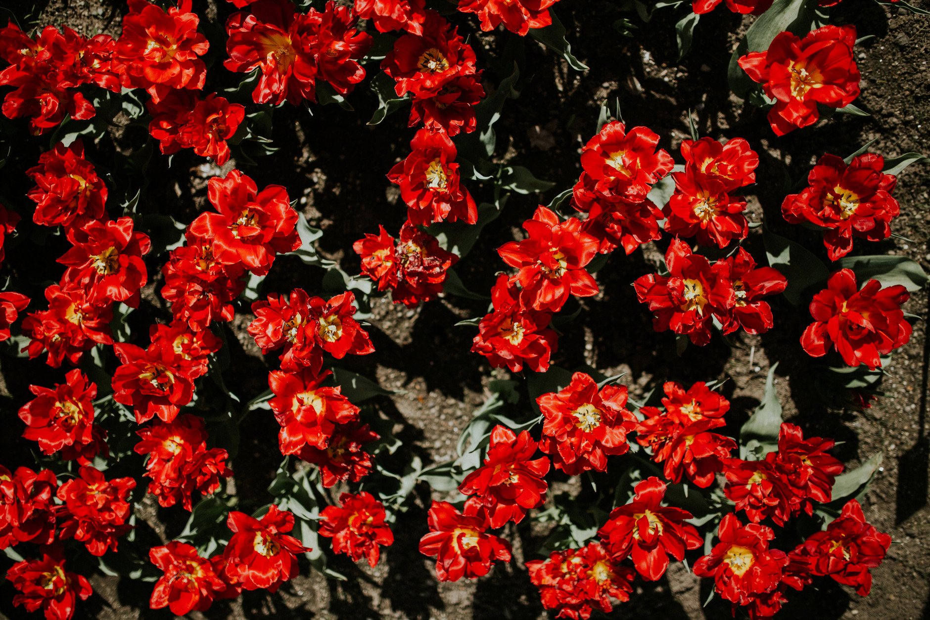 spring-botanical-gardens-dublin-photography-0036.jpg
