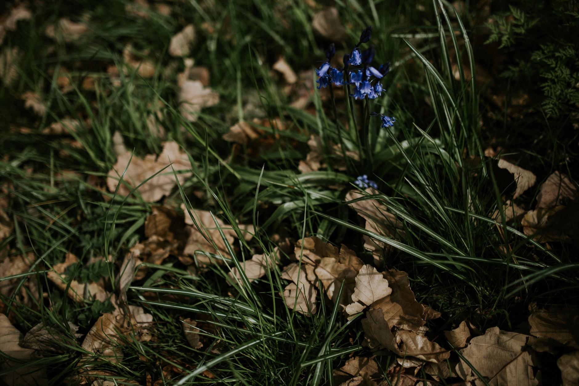 spring-botanical-gardens-dublin-photography-0038.jpg
