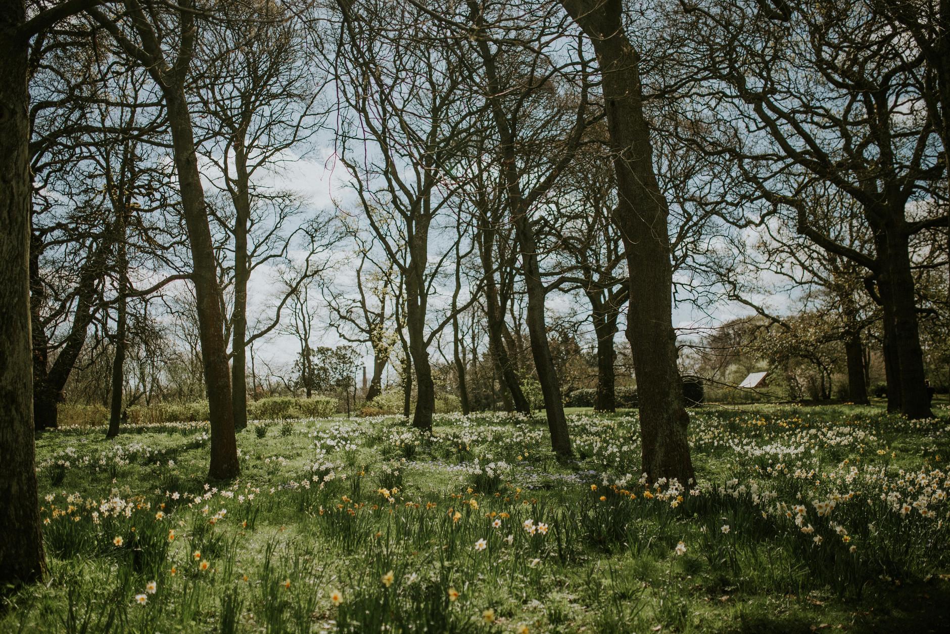 spring-botanical-gardens-dublin-photography-0040.jpg