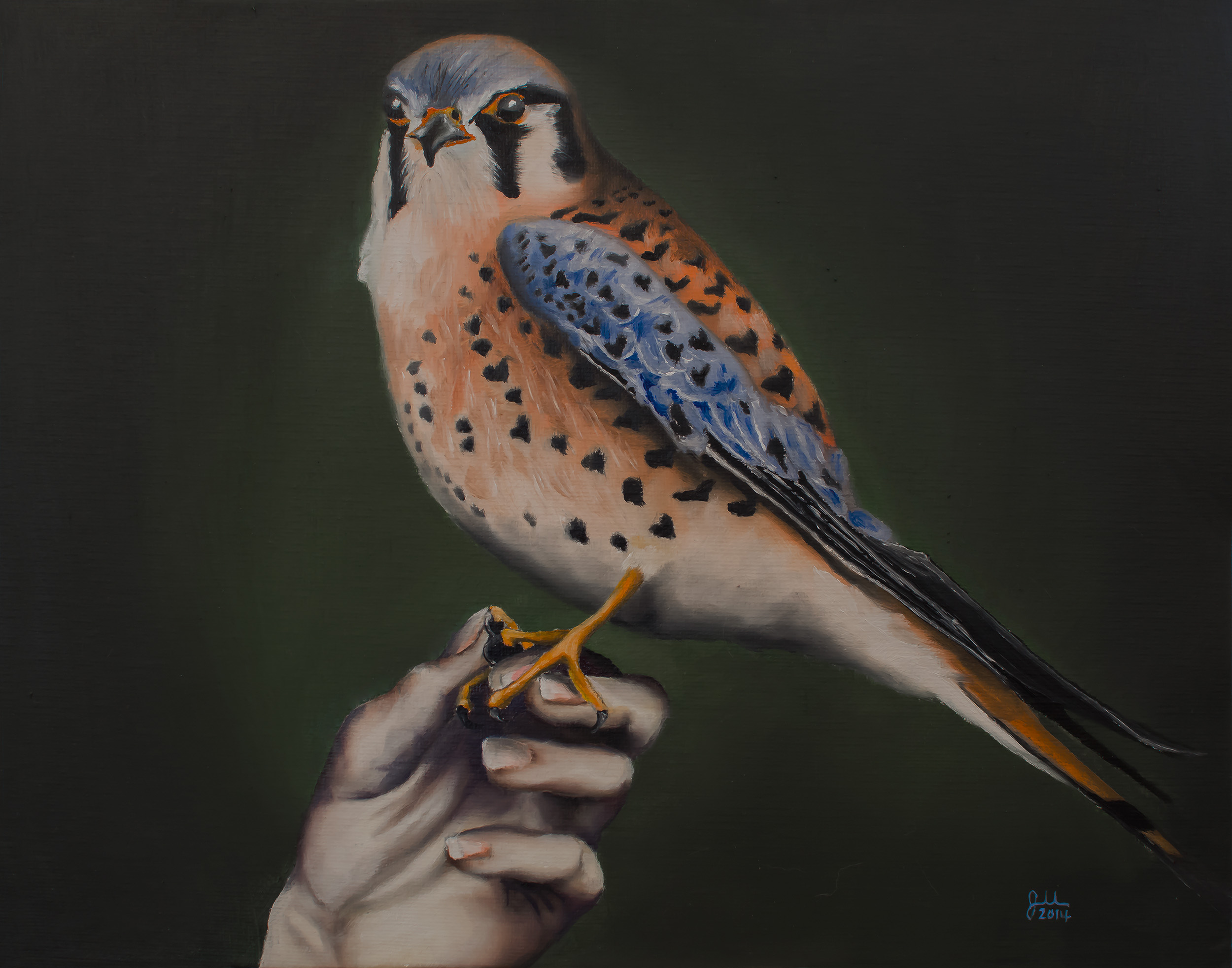 """I WOULD BE A KESTREL   Oil on canvas panel, 11x14"""", 2014"""