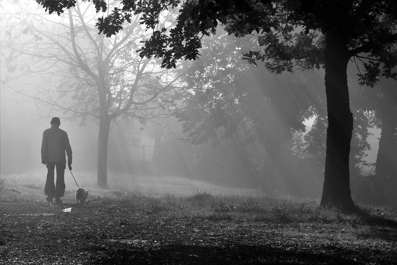 the-fog-3738777_1280.jpg
