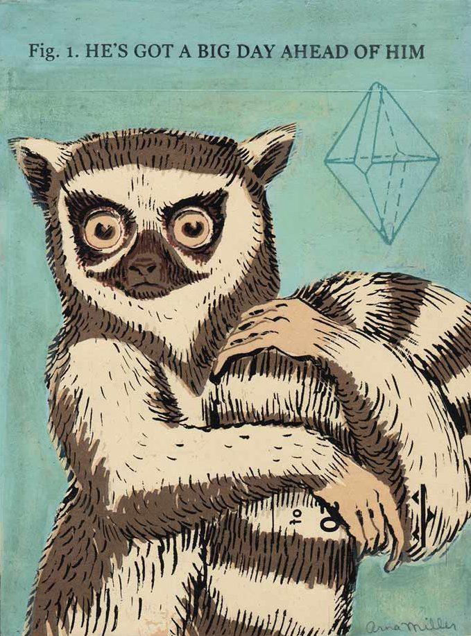 1-lemur-e1504746129301.jpg