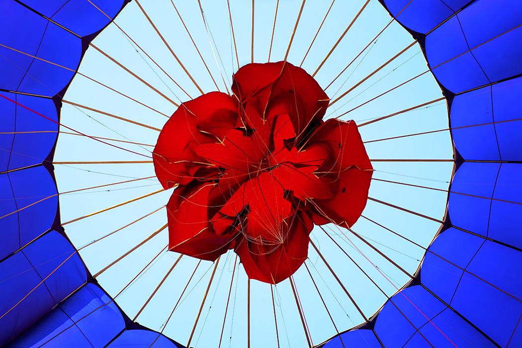 Flower in a Balloon
