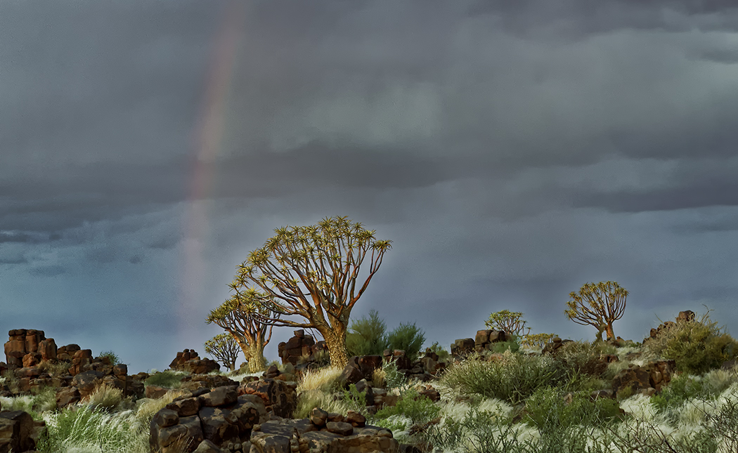 Quiver Tree Catches a Rainbow