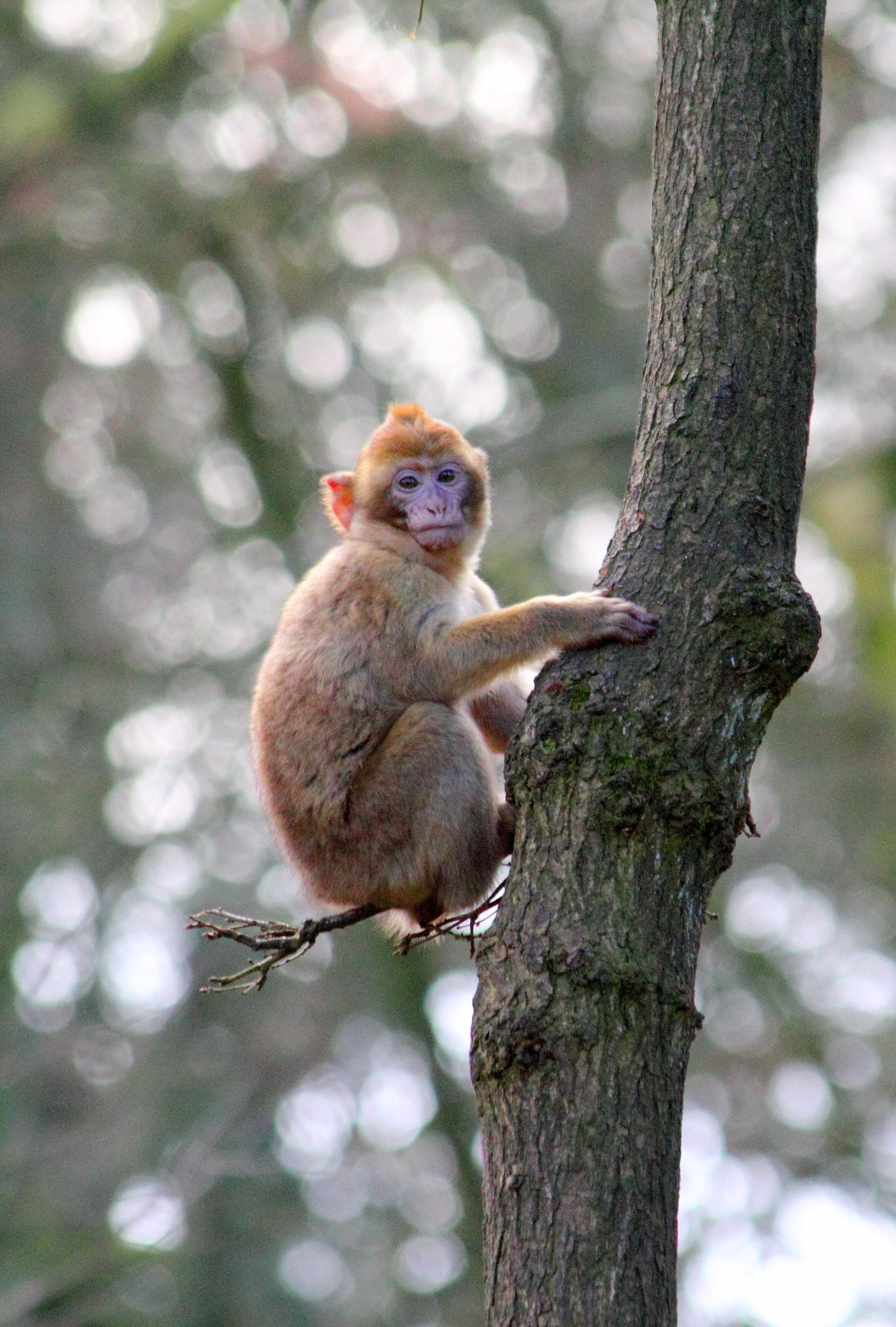 animal-ape-baby-monkey-132434.jpg