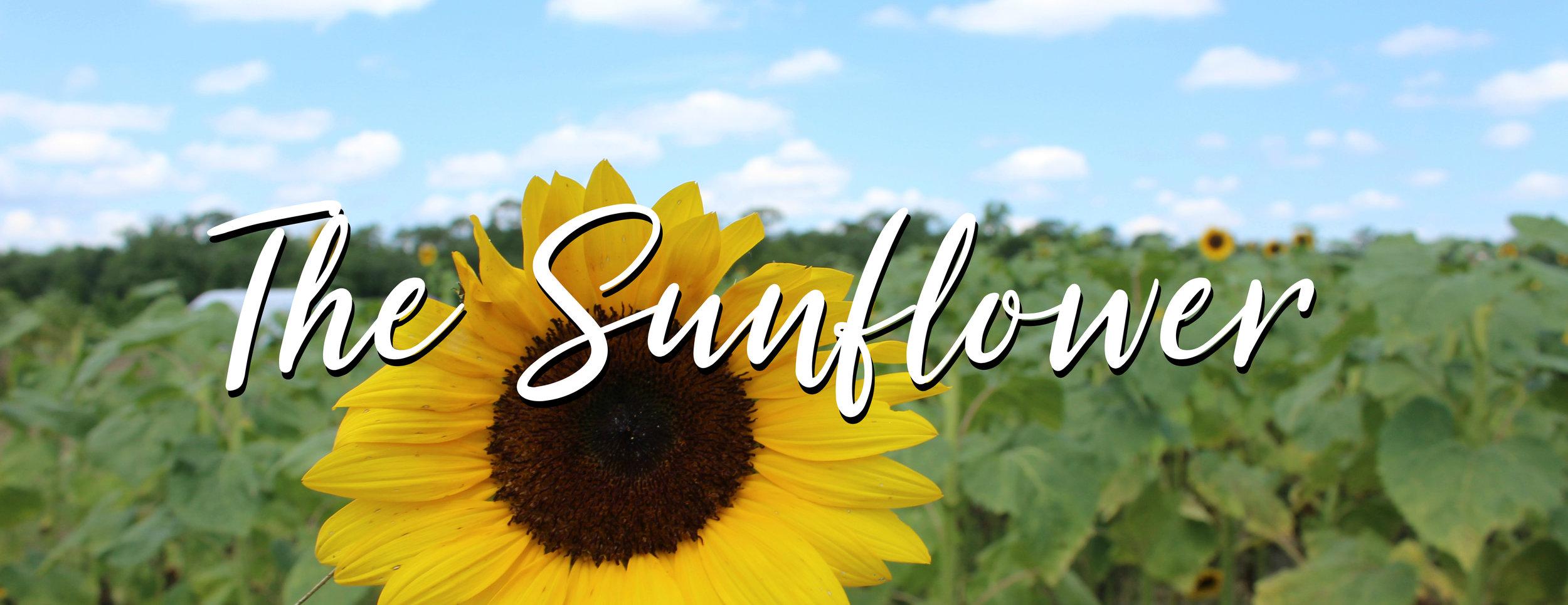 Michelle Jester The Sunflower2.jpg