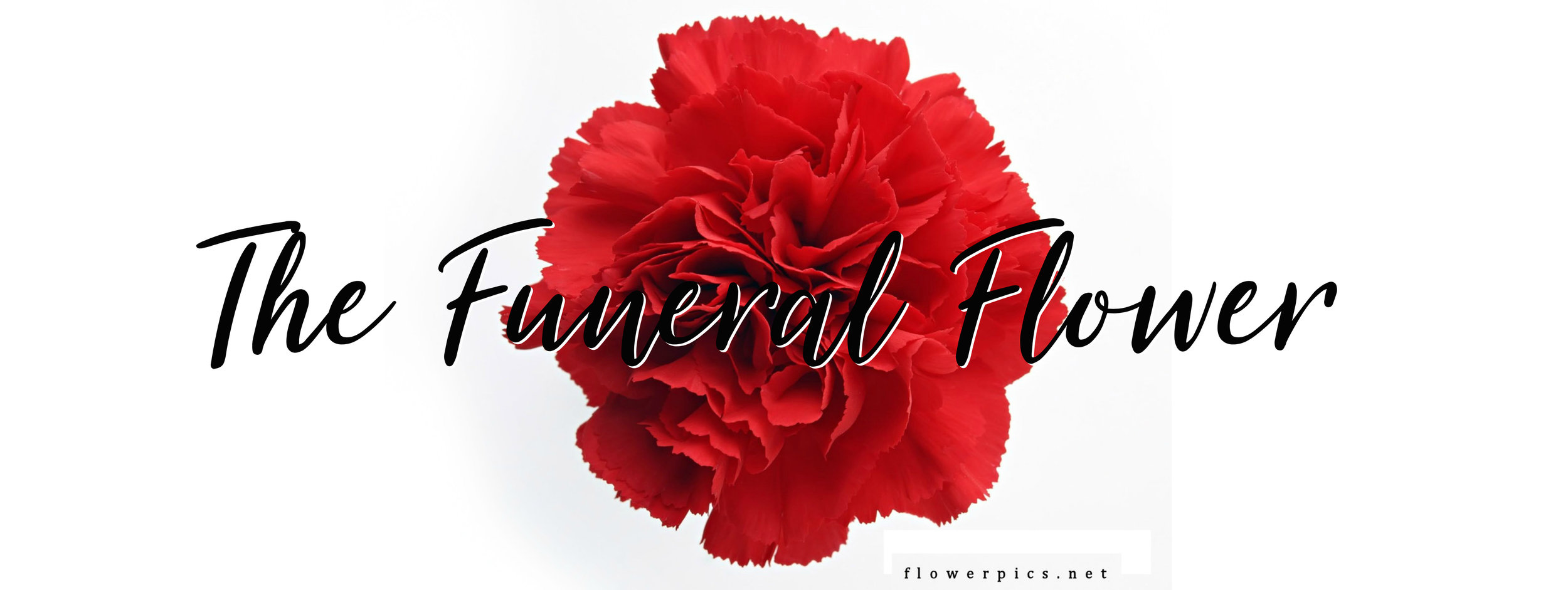 michelle_jester PAGE The Funeral Flower221qw.jpg