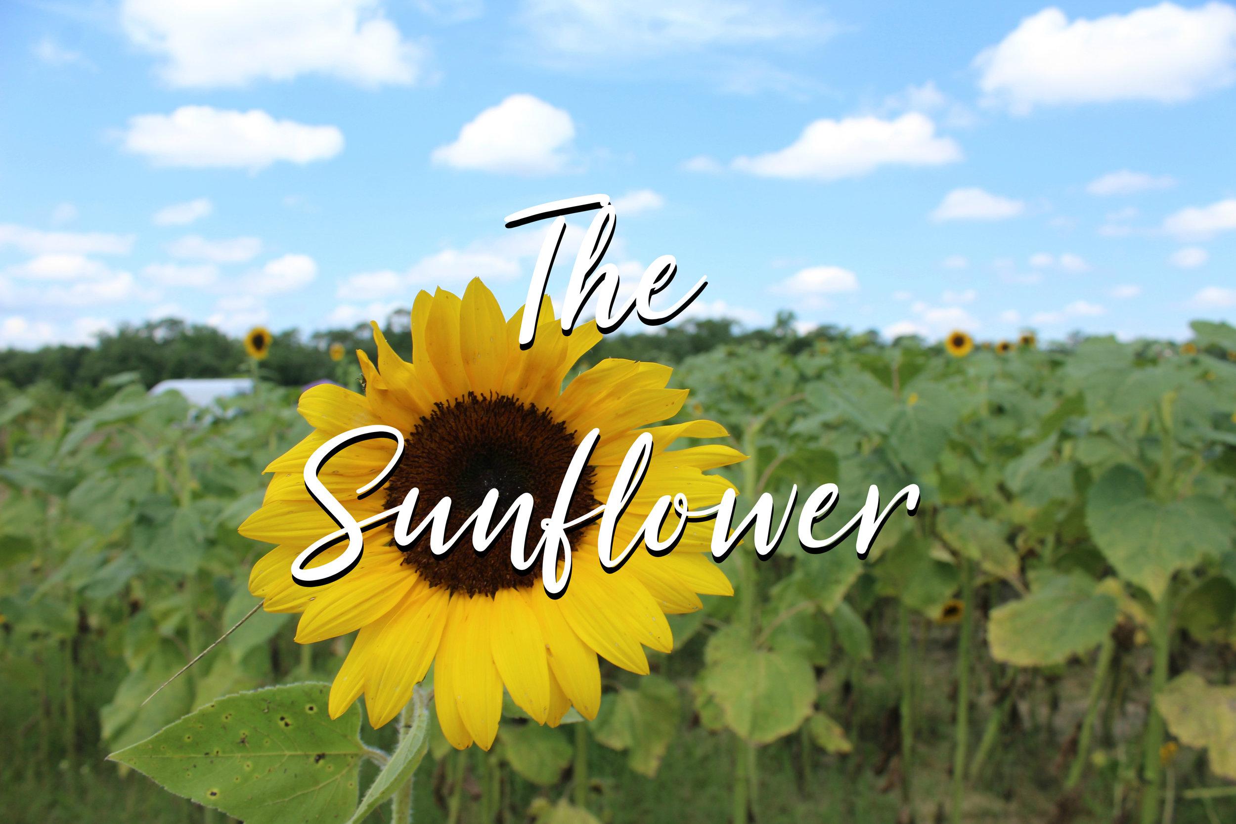 Michelle Jester The Sunflower1.jpg