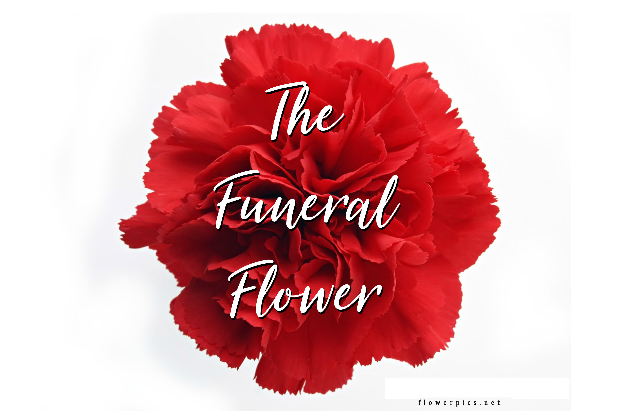 michelle_jester MAIN PAGE The Funeral Flower221.jpg