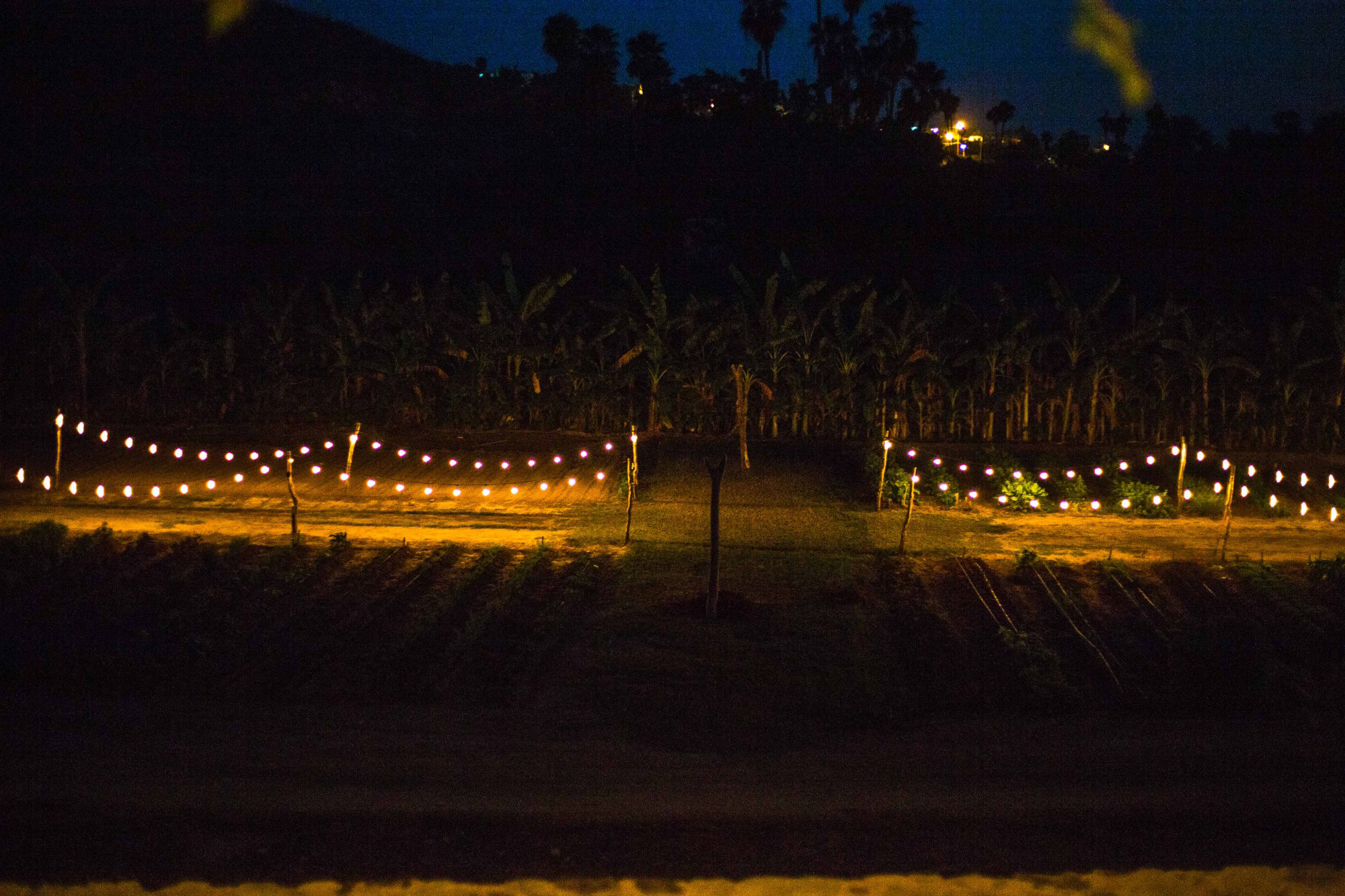 lights-around-the-garden[1].jpg