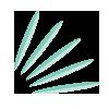 Lumette_botanical-icons_grandfir_100.png