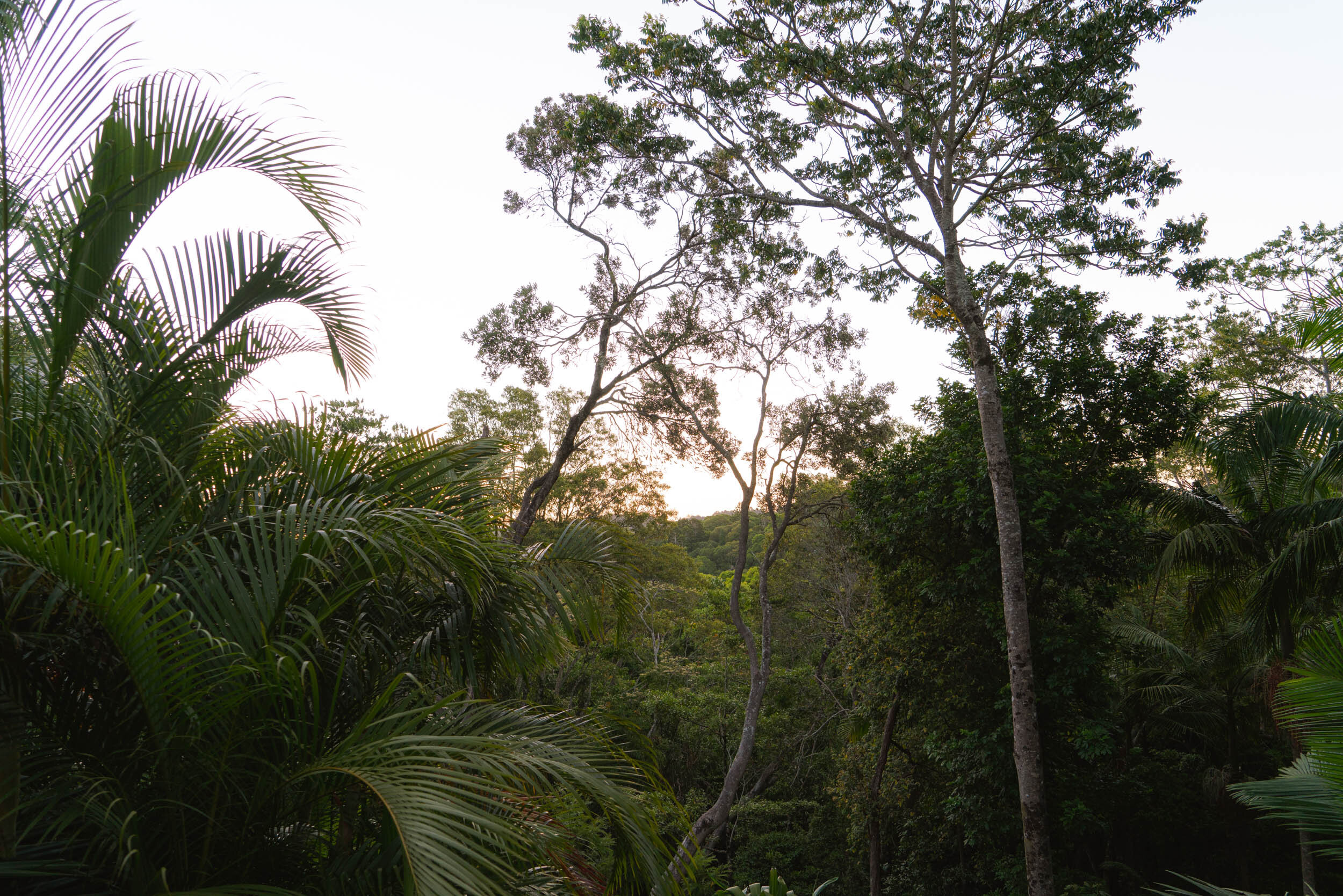 View from the back deck overlooking the rainforest.