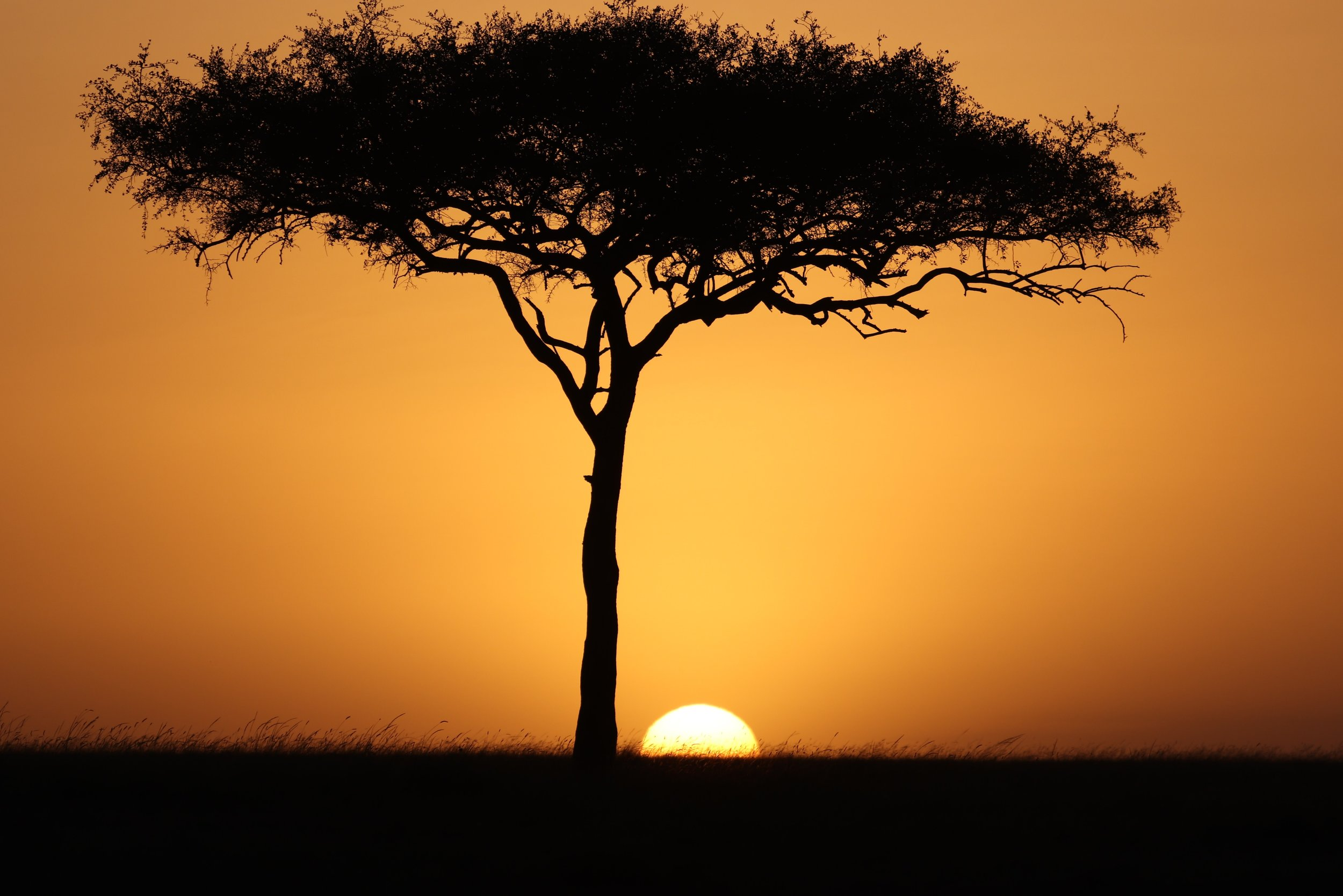 Tree in the Masai Mara Reserve