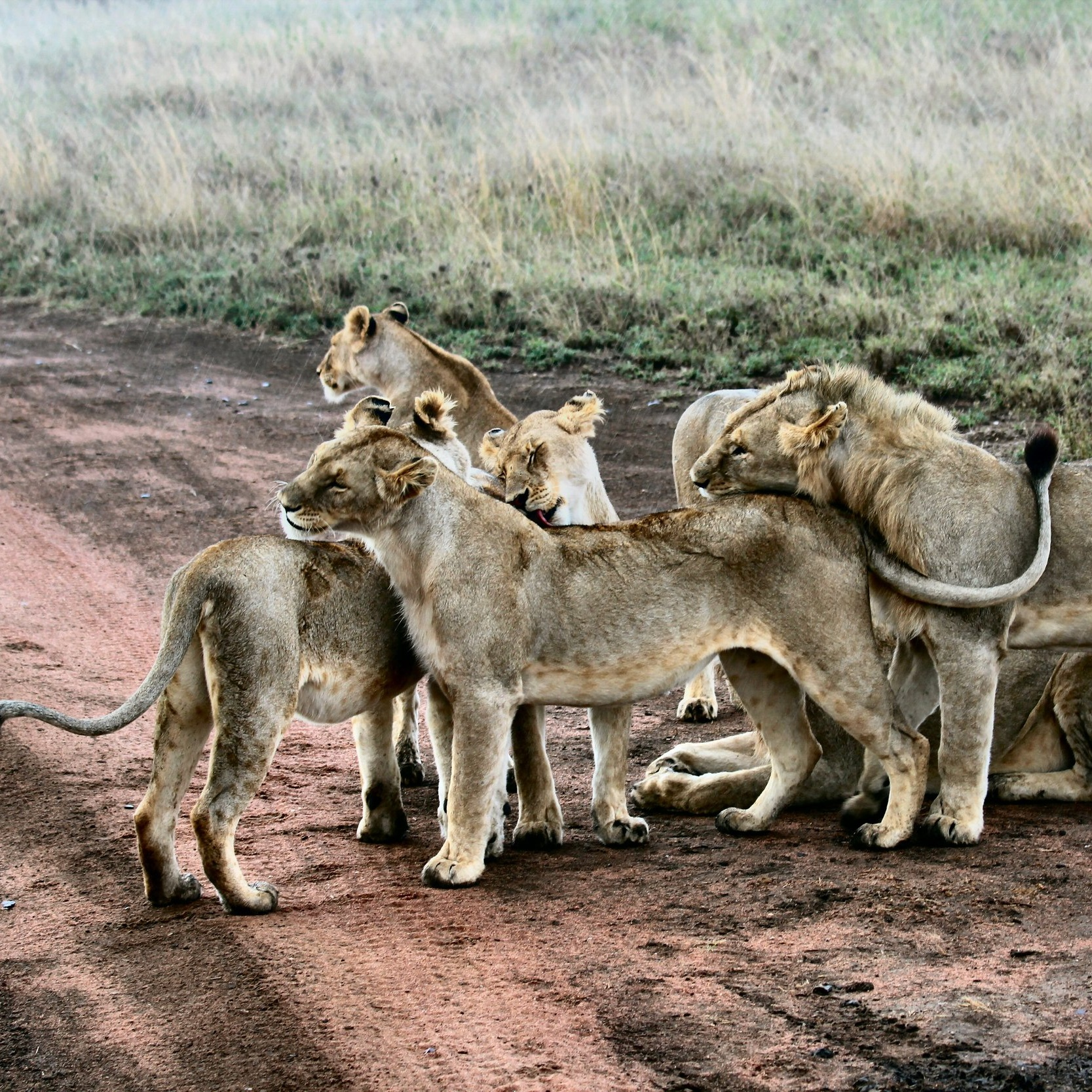 Safari and Wild Life