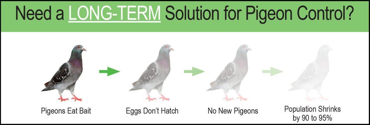 long-term-solution-pigeon-control.jpg