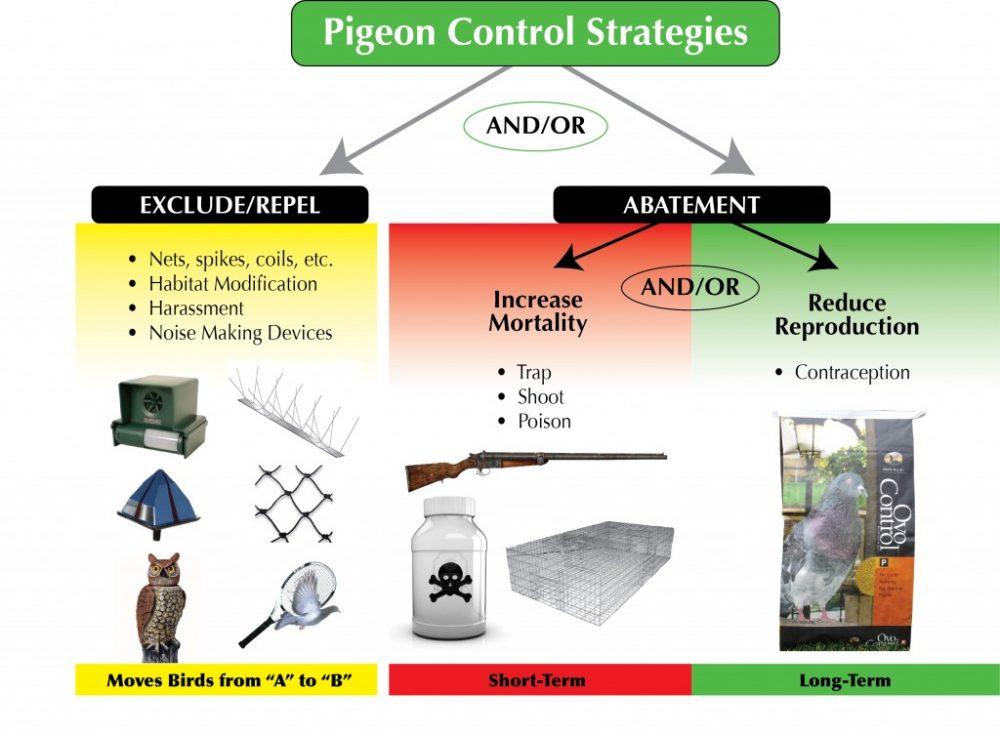 pigeon-control-strategies-en.jpg