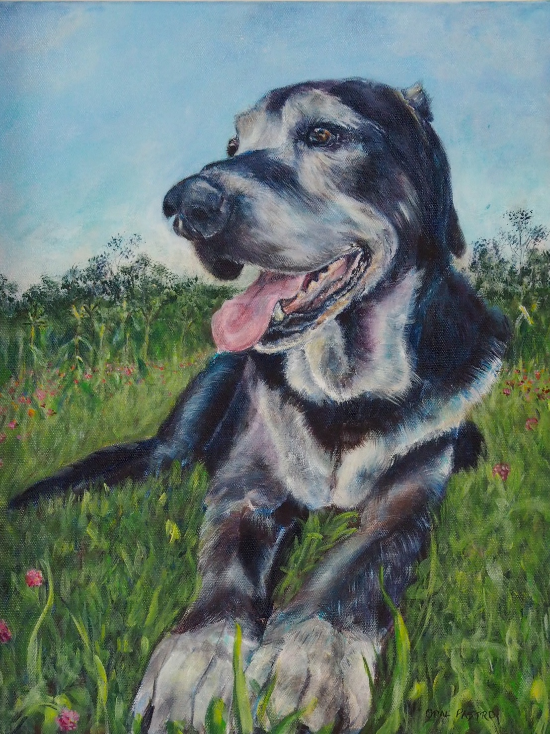 """""""I truly love it""""… - """"It's been 9 weeks weeks since Oscar left me. (I still shed a few tears each day…) But Opal you have gifted him back to me in a new way, in his portrait. """" -NatalieCommissioned as a memorial portrait to celebrate Oscar's life.Acrylic on canvas 12"""" x 16""""Brisbane, Qld, Australia"""