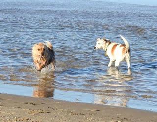 girls at the beach.jpg