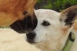 Dog Meet.jpeg