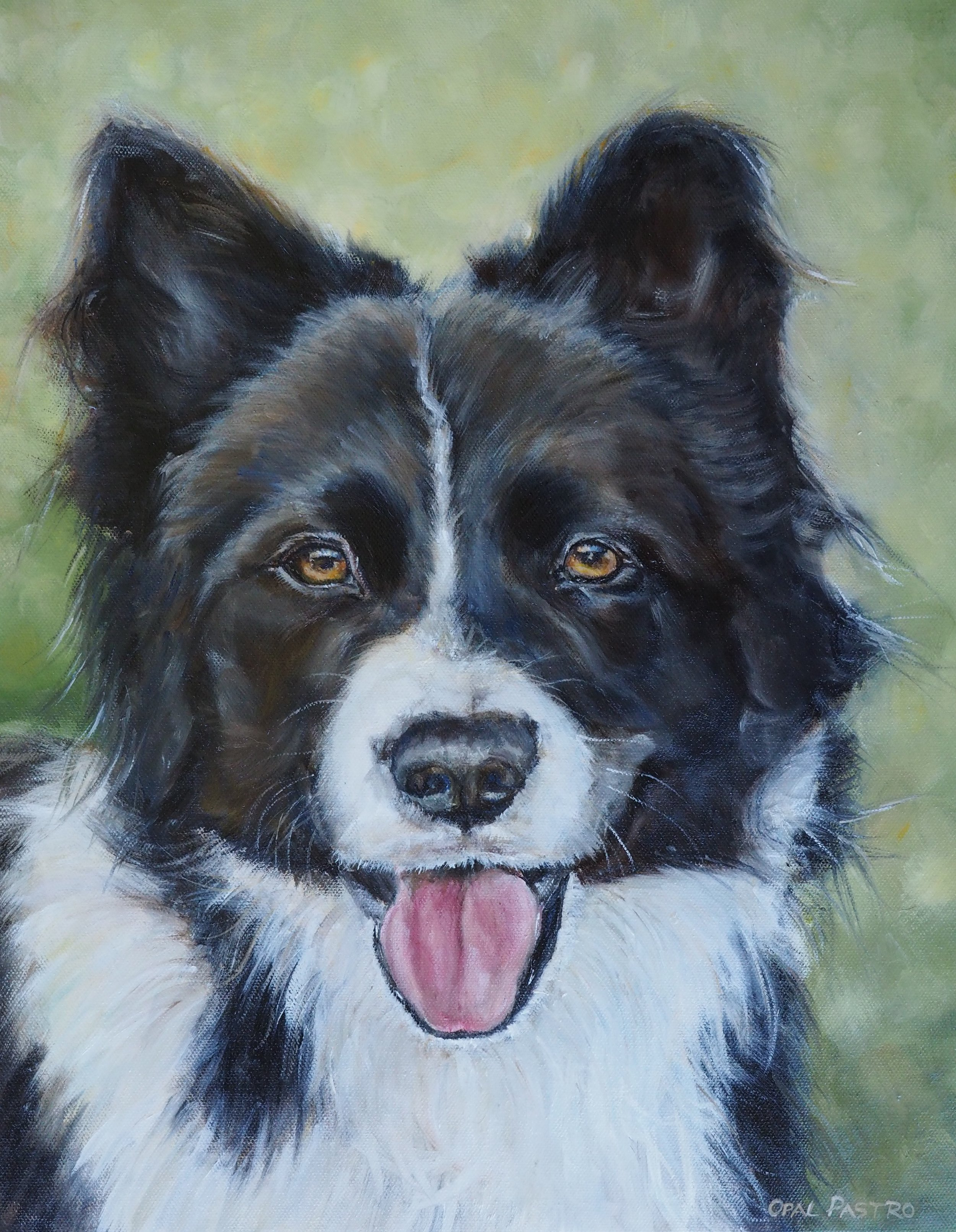 DOG CUSTOM PAINTING OF BOARDER COLLIE HAND PAINTED FROM PHOTOS BY AUSTRALIAN ARTIST, OPAL PASTRO ART