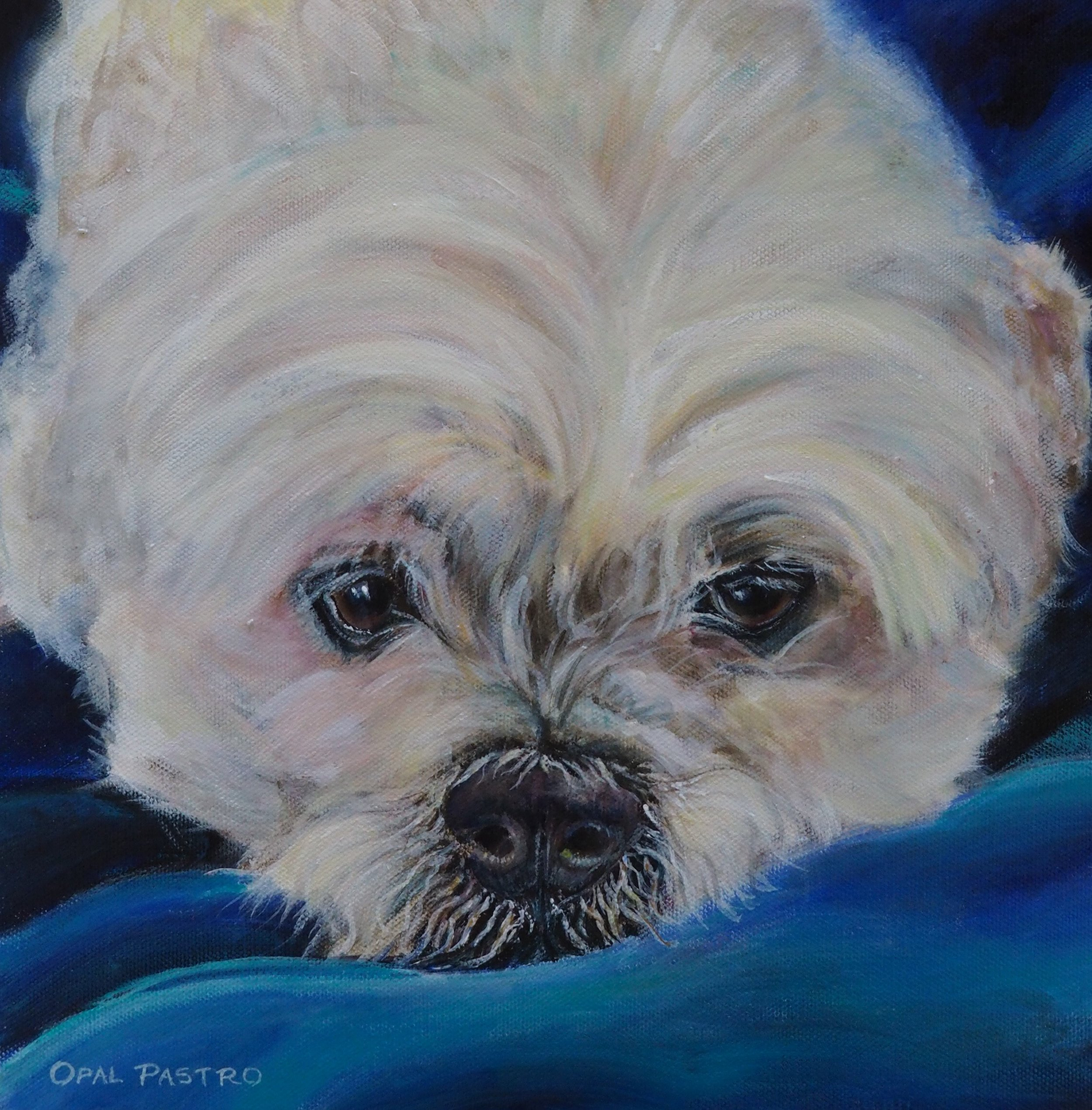 WHITE DOG PAINTING WITH BLUE BLANKET OF MALTESE MIX BY OPAL PASTRO ART