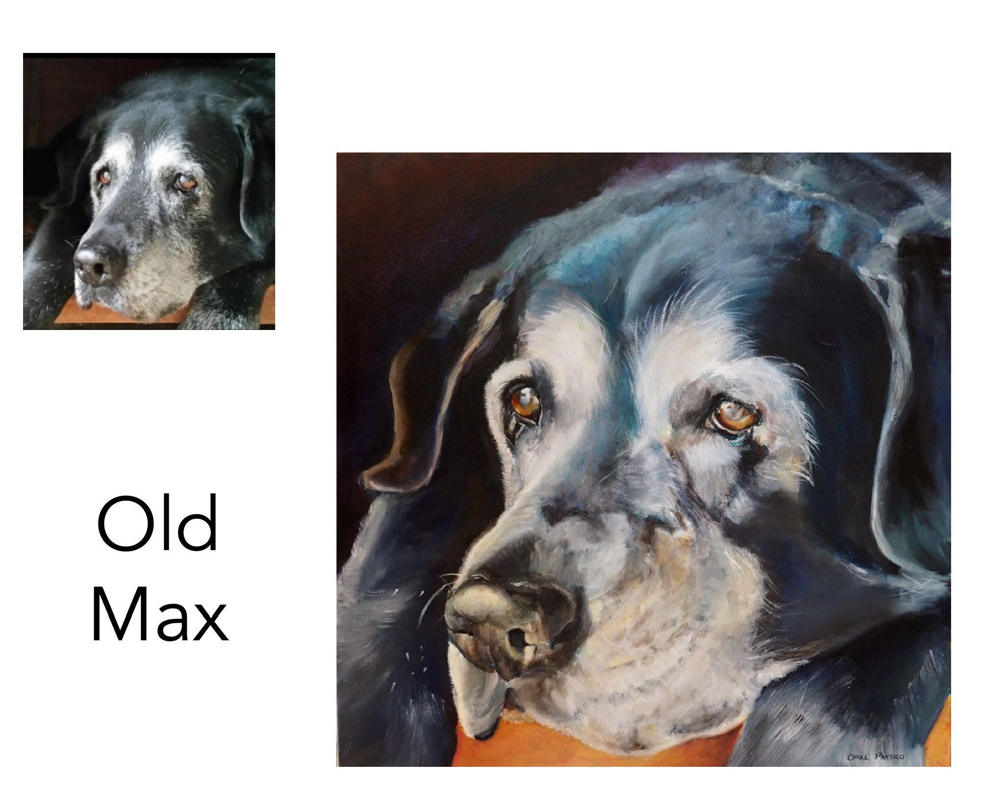 "Old Black Labrador - Acrylic on canvas 30.48cm x 30.48cm 12"" x 12"" Private commissionBellingen, NSW————————————Old Max passed away while I was painting his custom portrait. His sad owners now have a beautiful hand painted heirloom to honor his life by, and to remember his kind heart and and gentle nature."