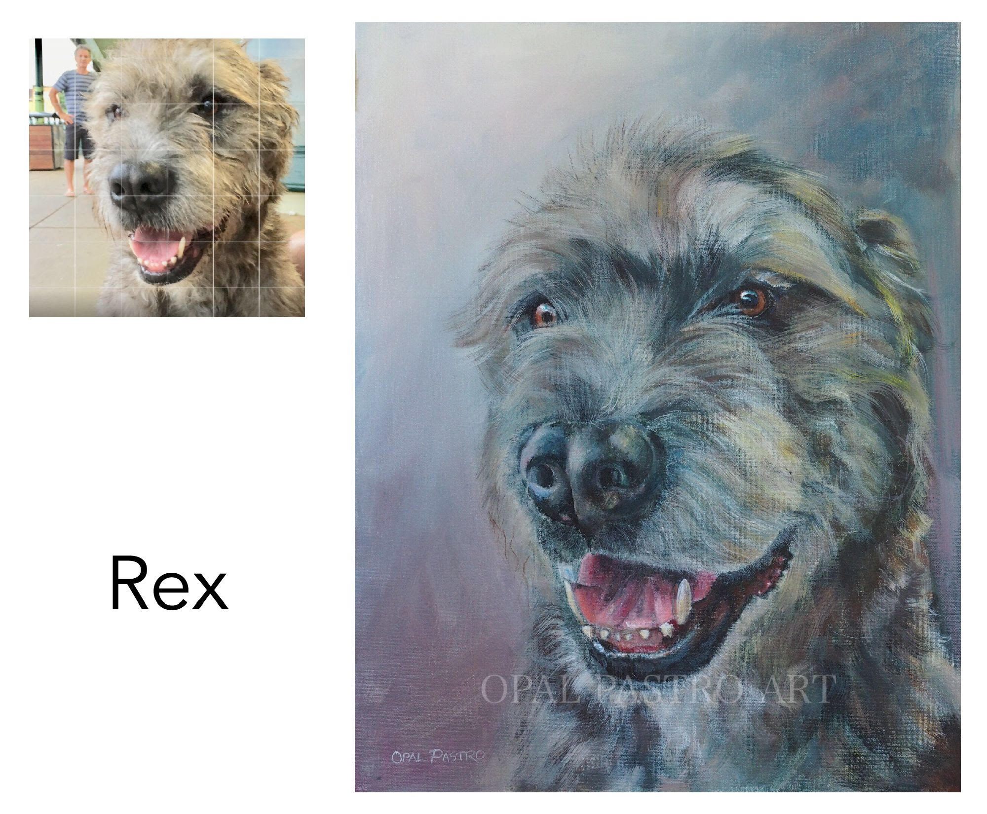 """Irish Wolfhound - Acrylic on canvas 41cm x 60cm 16""""x 20"""" Private CommissionBellingen, NSW————————————Rex is a delightful and naughty boy. He loves meeting people and getting pats. He also loves food and takes it whenever he can."""