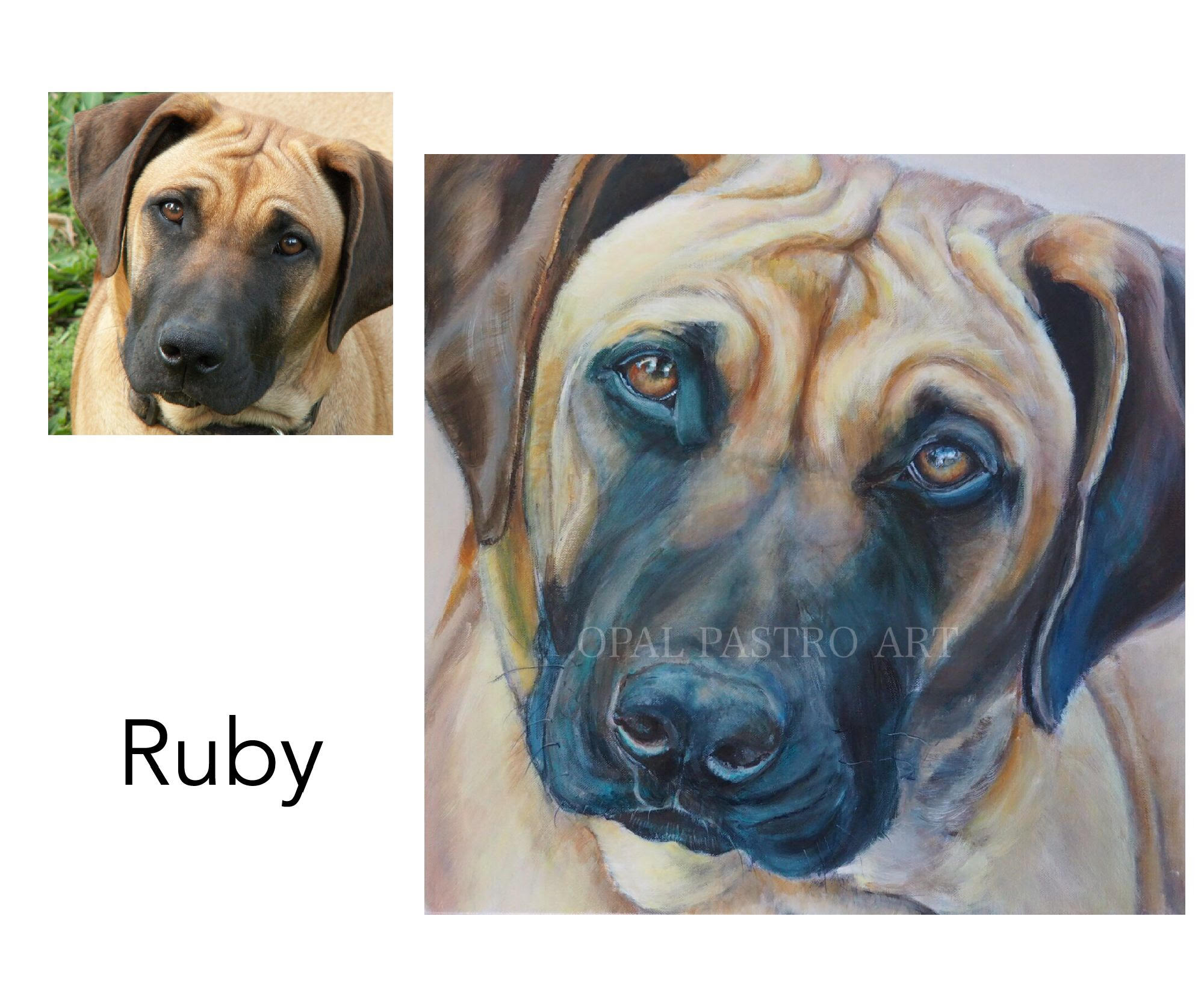 """Rhodesian Ridgeback - Acrylic on canvas 18"""" x 18""""  (50.80cm x 50.80cm)Memorial PortraitBellingen, NSW———————————-Ruby's grieving mum contacted me after losing her beautiful girl from old age. She missed her so much. I felt honored to be asked and really loved painting her beautiful eyes and wrinkles. Ruby is back in her home and her mum's heart each time she looks at Ruby's portrait"""