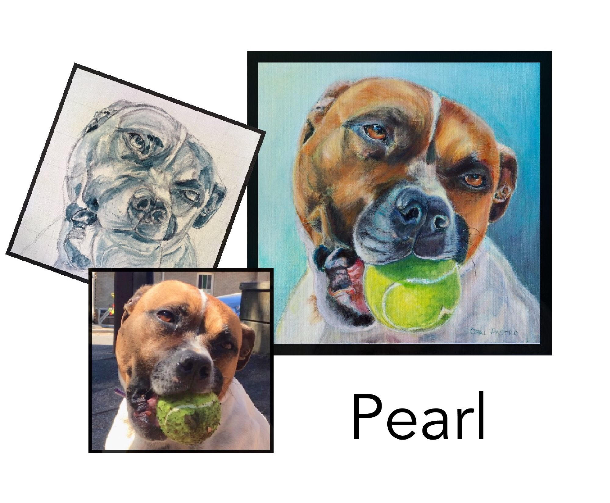 English Staffy - Acrylic on canvasPrivate commissionCoffs Harbour, NSW———————————Pearlie is a ball dog. you could say she is obsessed. When she sat for her photo shoot, we couldn't get it out of her mouth