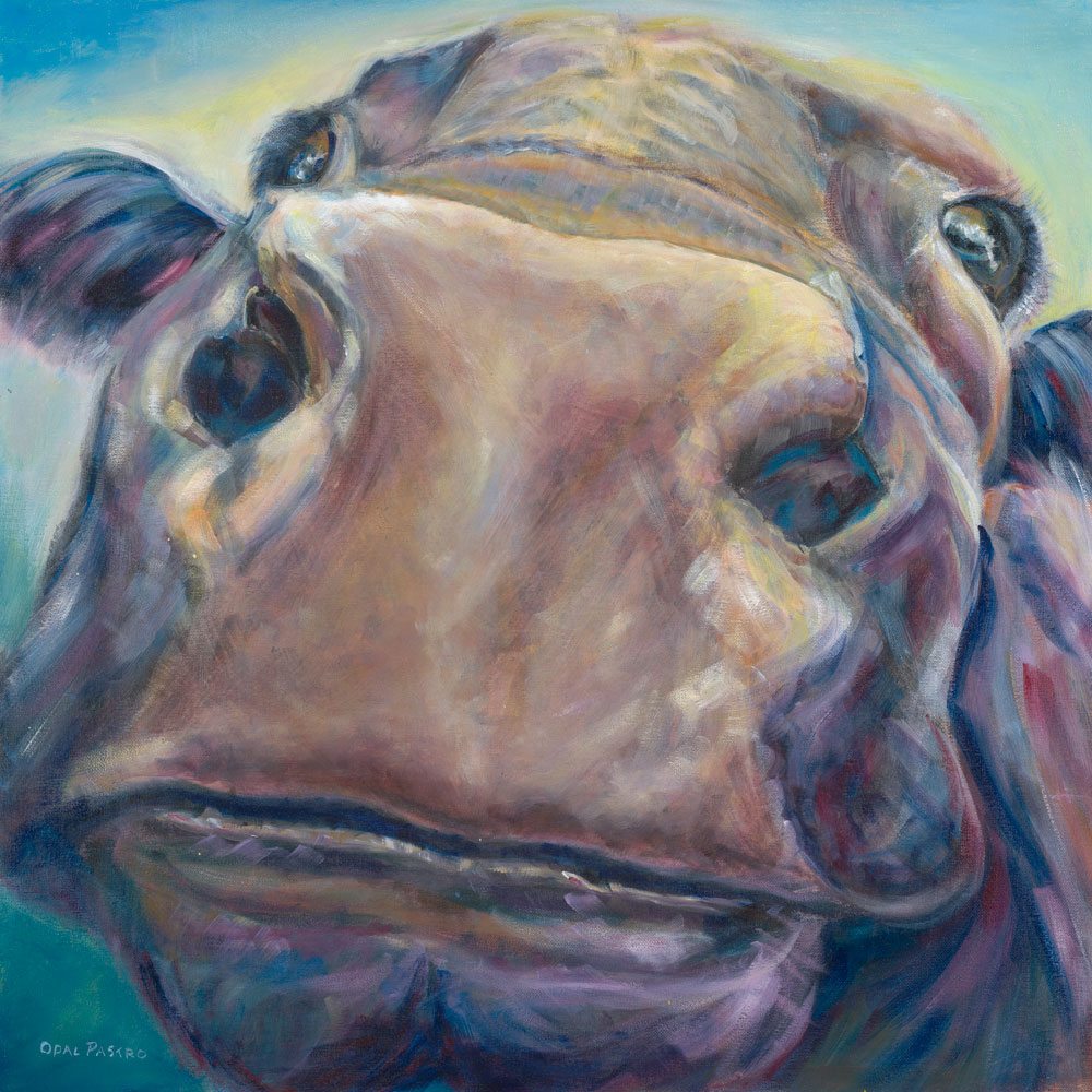 COW ART. BULL NOSE BY OPAL PASTRO ART