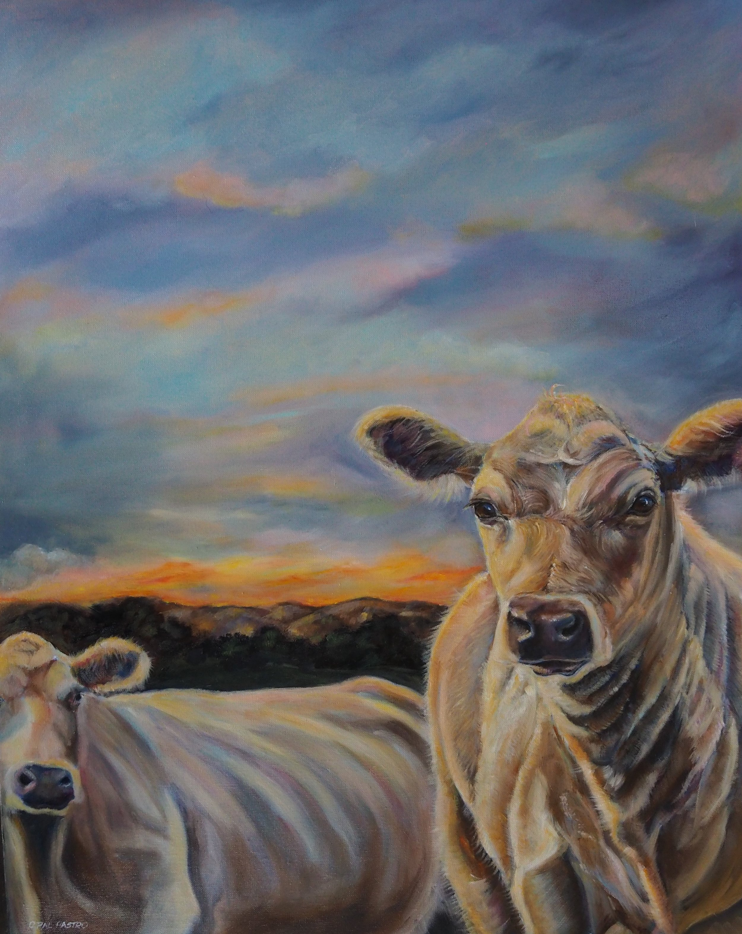 COW ART OF MURRAY GREY COWS TITLED SUNSET ON THE PLATEAU BY OPAL PASTRO ART