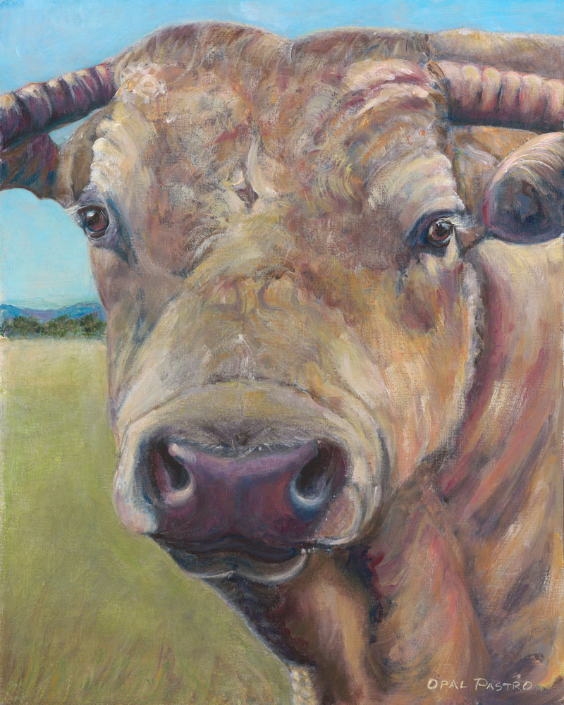COW ART MURRAY GREY BULL FINE ART REPRODUCTION BY OPAL PASTRO ART