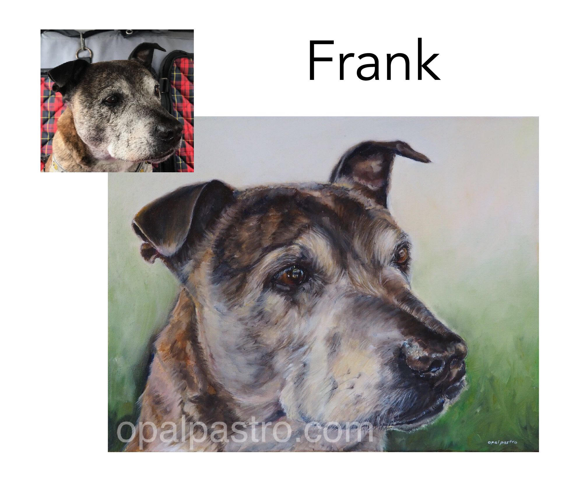 """English Staffy - Acrylic and oil on Canvas, 14"""" x 18"""" (35.5cm x 45.72cm)Private memorial portraitBellingen, NSW—————————————-Frank had a great life and a loved life. His mission in life was to created mayhem and madness- even so, he is a very dearly missed member of his family. His memorial portrait was commissioned as a loving tribute to a dog who lives on in the hearts of those who loved him."""
