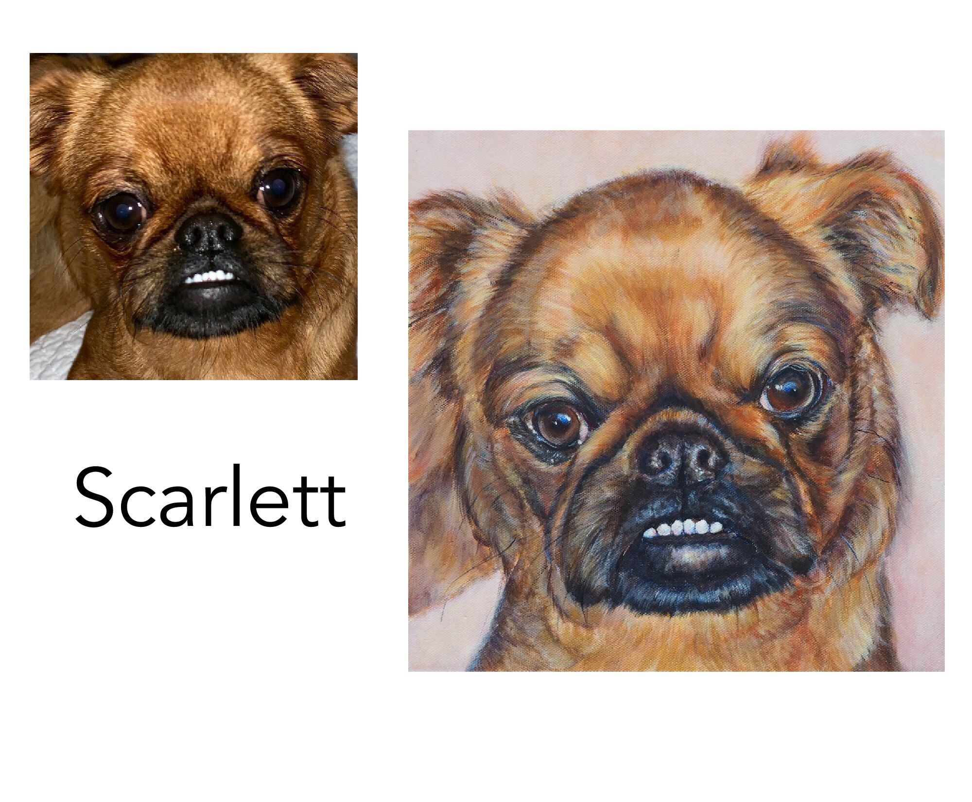 """Custom Dog Portrait - Brussels GriffonAcrylic on Canvas, 30 x 30cm ( 12x12"""")Sydney, NSW———————————-Scarlett is a lovely young Brussels Griffon with an unforgettable underbite. She is the sixth custom dog portrait painted for her  loving family."""
